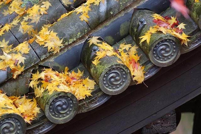 古都京都圓光寺の日本庭園美しさにびっくり、徳川家康縁のお寺京都・圓光寺_d0181492_16255332.jpg