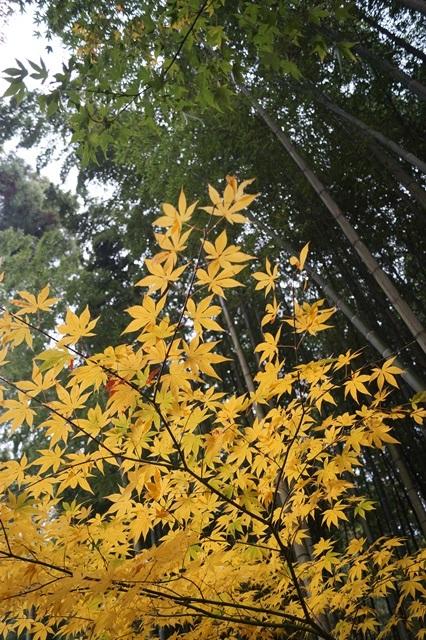 古都京都圓光寺の日本庭園美しさにびっくり、徳川家康縁のお寺京都・圓光寺_d0181492_16292440.jpg