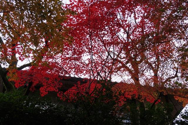 藤田八束の京都・真正極楽寺真如堂を訪ねて①_d0181492_1725741.jpg