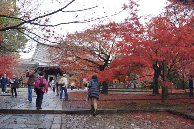 藤田八束の京都・真正極楽寺真如堂を訪ねて①_d0181492_1754572.jpg