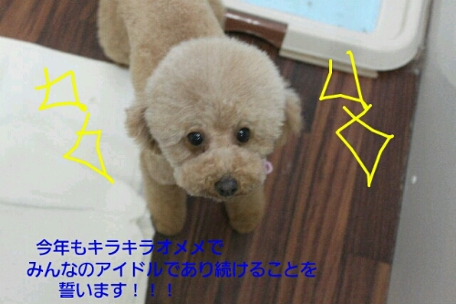 新年!!!_b0130018_16142541.jpg