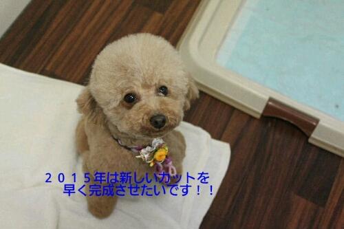 新年!!!_b0130018_16153558.jpg