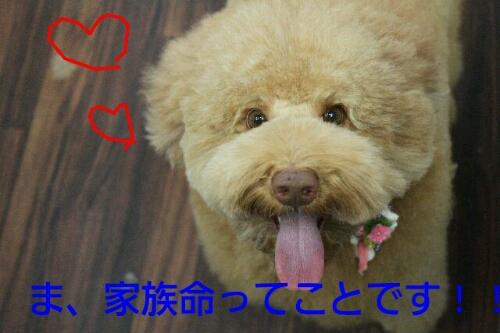新年!!!_b0130018_1620540.jpg