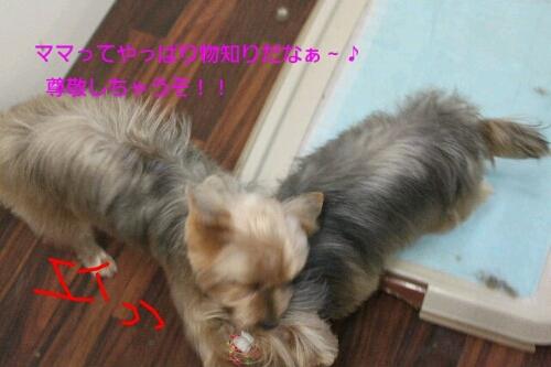 新年!!!_b0130018_16265886.jpg