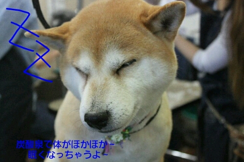 新年!!!_b0130018_16305774.jpg