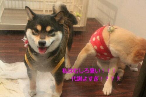 新年!!!_b0130018_16314952.jpg
