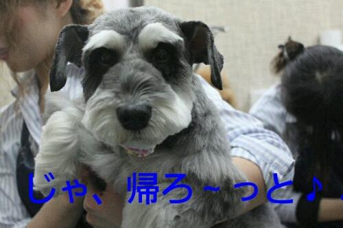 新年!!!_b0130018_16355349.jpg