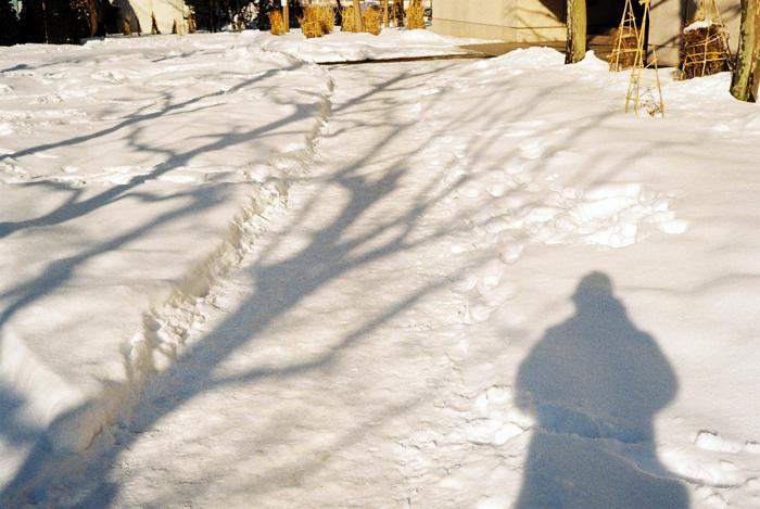 雪上の影_c0182775_16505472.jpg