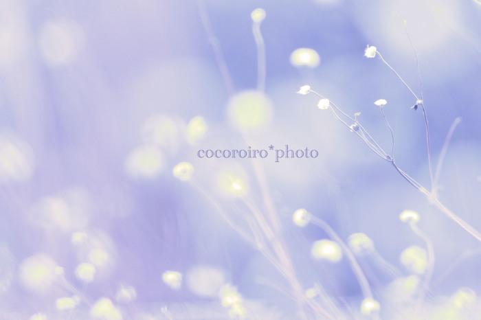 f0336684_16070381.jpg