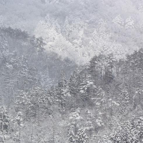 寒波がやってきた_f0099102_15242695.jpg