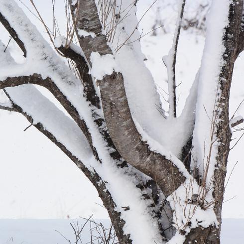 寒波がやってきた_f0099102_1524862.jpg