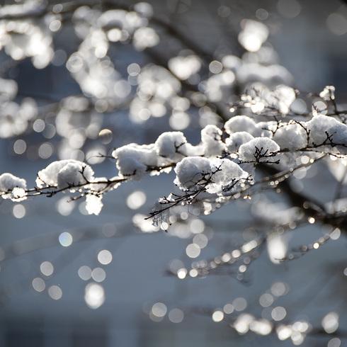 寒波がやってきた_f0099102_15291271.jpg