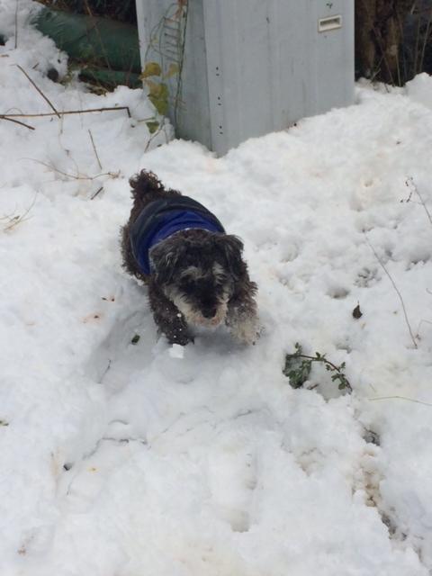 雪の正月_f0161323_175507.jpg