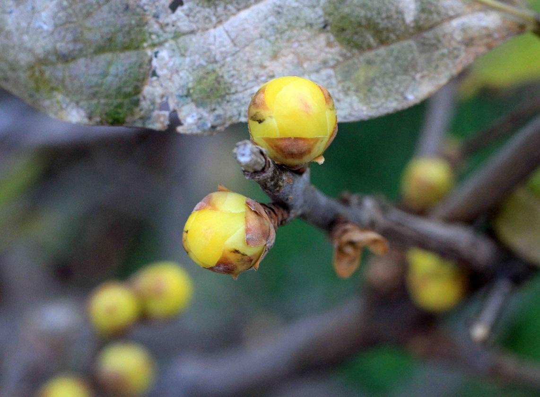 咲くまでの待つ喜び ~お正月の記念写真~_a0107574_19290769.jpg