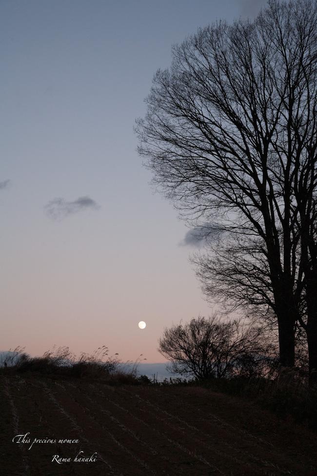 December of afterglow_c0137403_1542752.jpg