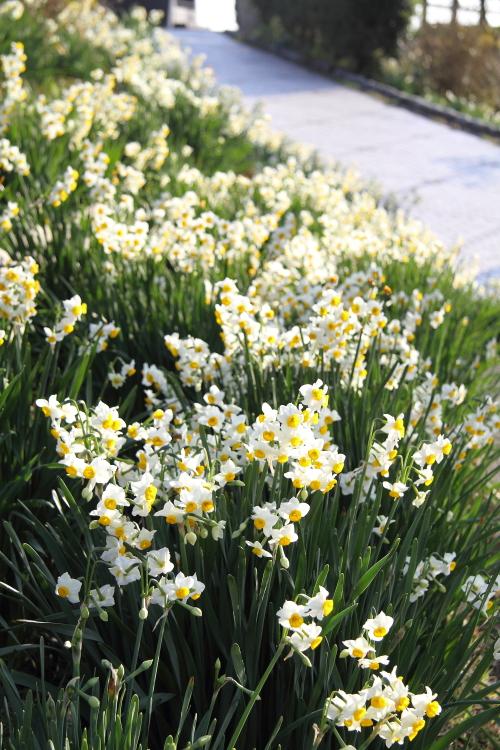 春が来た_b0190710_21513151.jpg