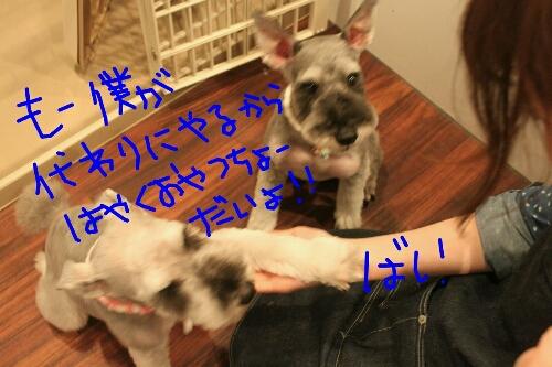 家族_b0130018_114918100.jpg
