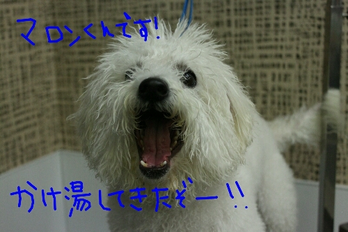 家族_b0130018_16491112.jpg