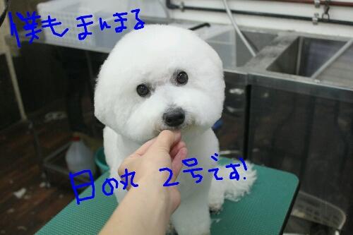 家族_b0130018_16514037.jpg