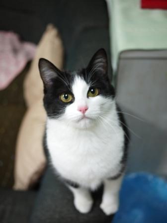 猫のお留守番 ハナちゃん編。_a0143140_22411464.jpg