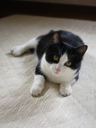 猫のお留守番 ハナちゃん編。_a0143140_22442480.jpg