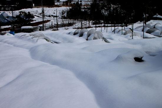 菜園は大雪_e0048413_18153151.jpg