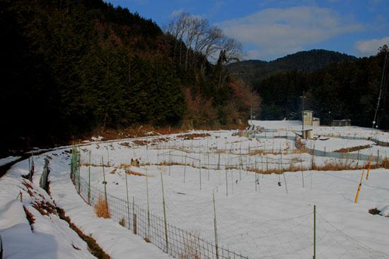 菜園は大雪_e0048413_1815749.jpg