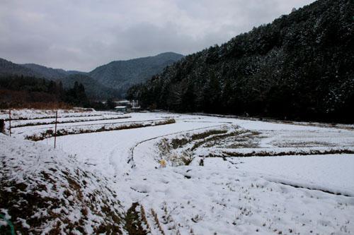 菜園は大雪_e0048413_1815757.jpg