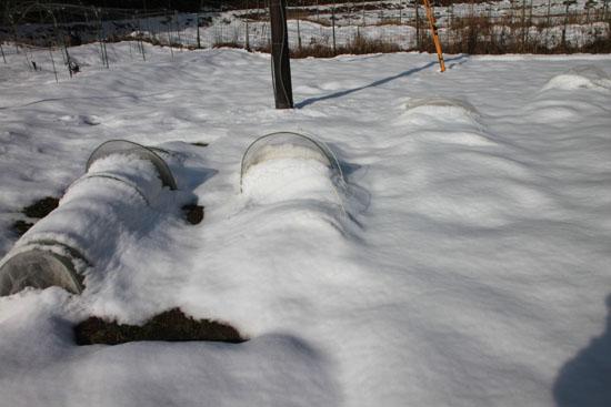 菜園は大雪_e0048413_1816142.jpg