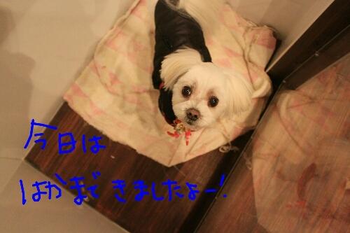 b0130018_22331045.jpg
