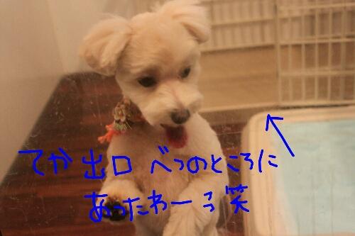 b0130018_2273673.jpg