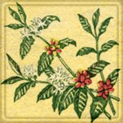 新年のイベント第1弾、『ハワイ・コナコーヒーを愉しむ会』_f0077789_7295440.jpg