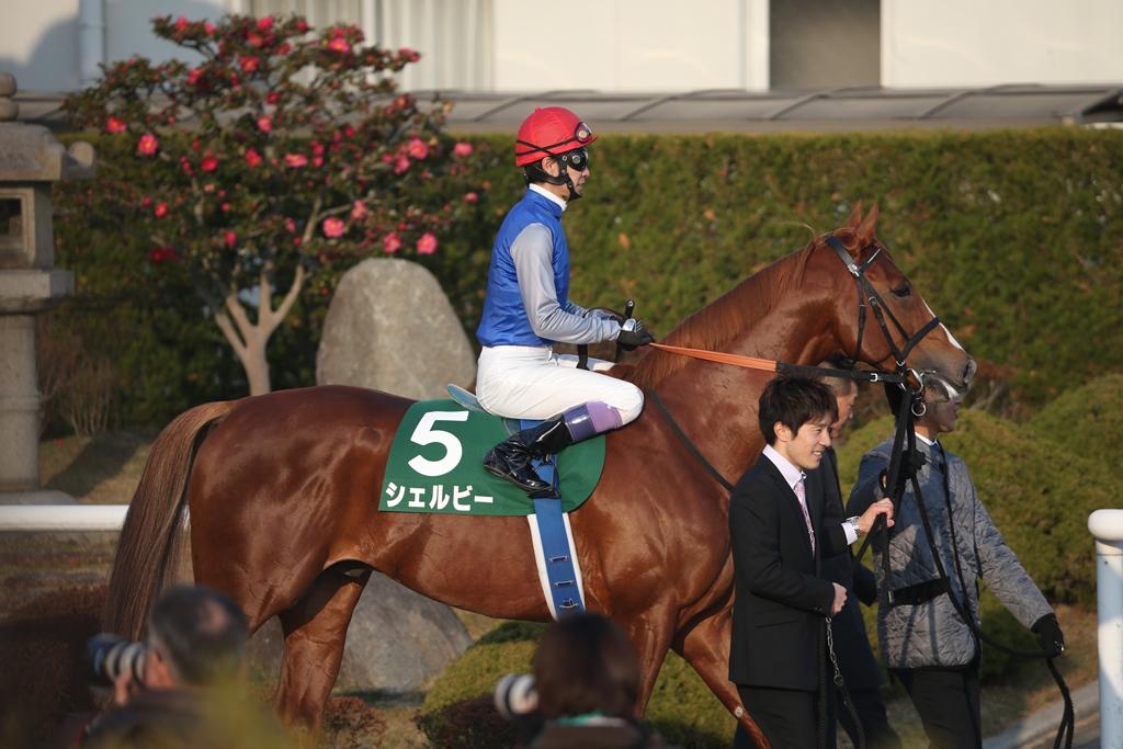 2015年1月4日 京都金杯(GⅢ)_f0204898_110017.jpg