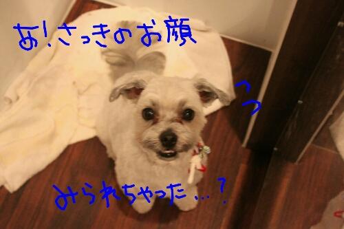 b0130018_1883310.jpg