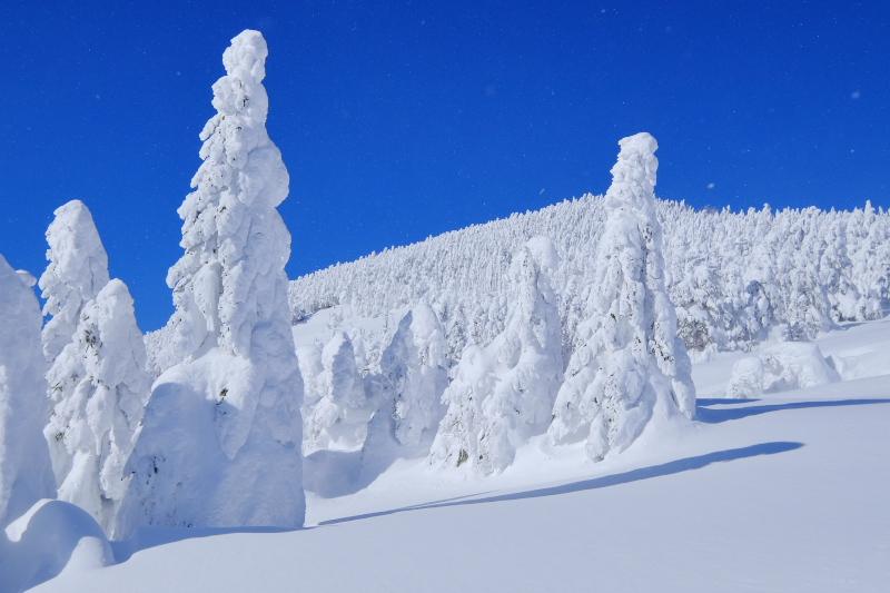 樹氷_c0167028_19462356.jpg