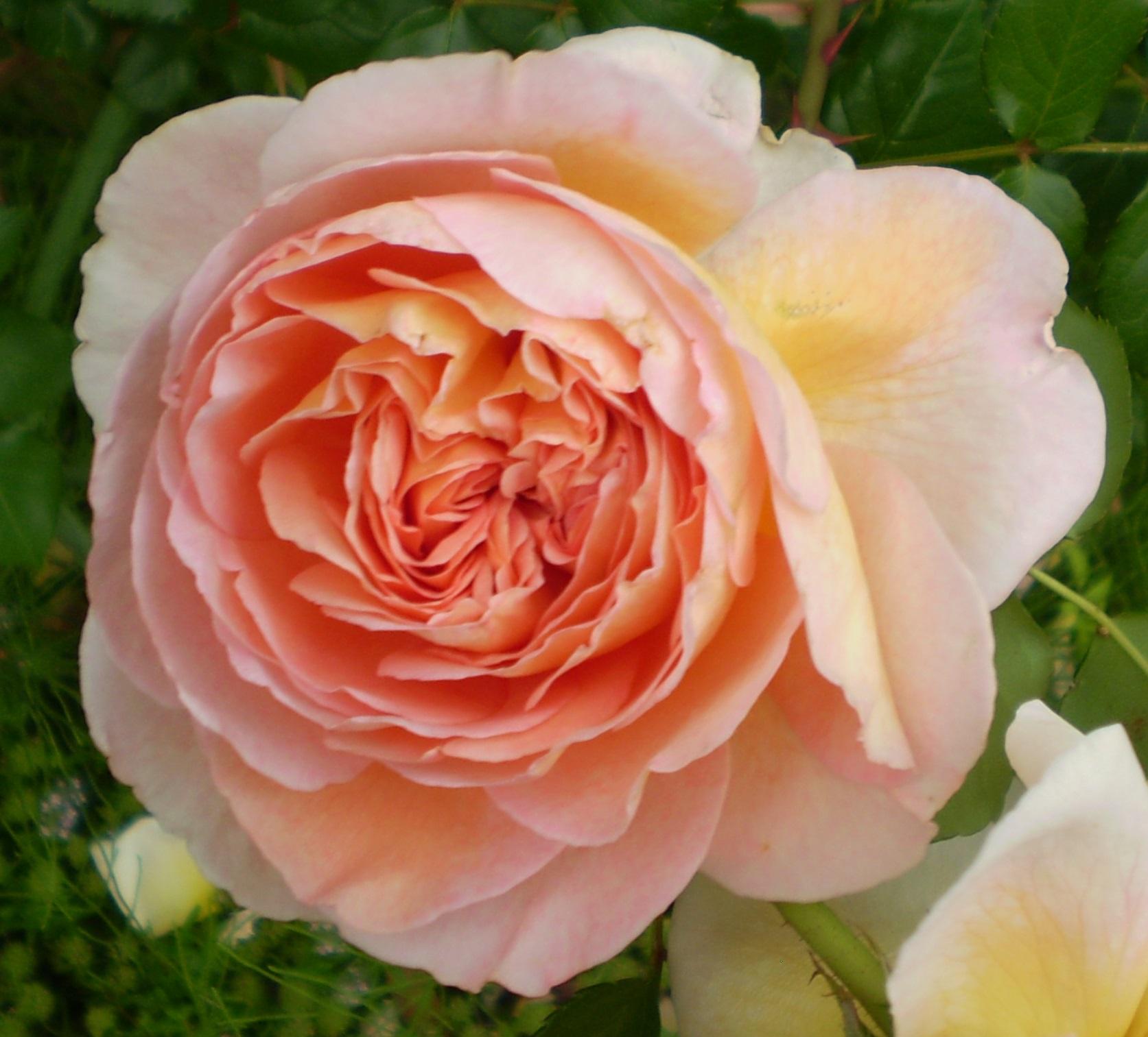 謹んで初春のお慶びを申し上げます。_f0139333_2374586.jpg