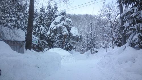 全員で滑って転んで泣いて笑った雪遊び 1日目_c0120834_12573232.jpg
