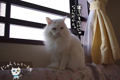 ミミちゃん 十二月二十六日_e0031853_12385678.jpg
