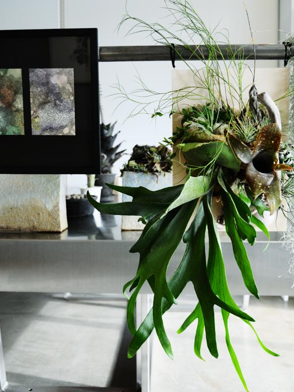 OCMA vol.002 川島一恵 「sacred tree」展 展覧会記録_f0191870_12564092.jpg