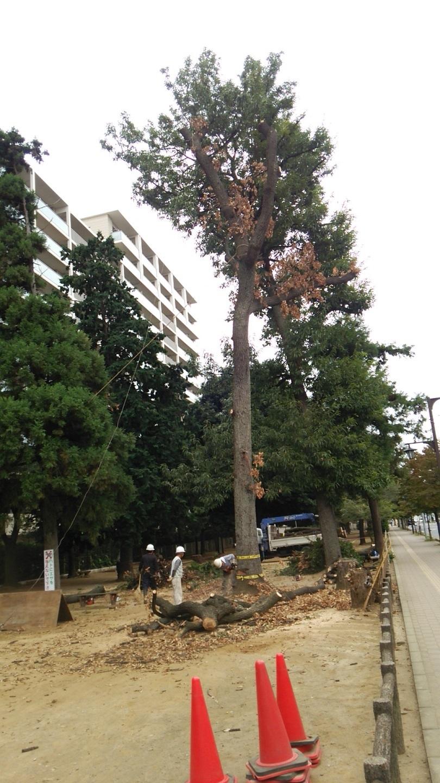原点を忘れない ~福岡中央公園の環境を愛し育てる会~_a0107574_19595871.jpg