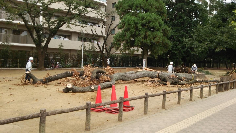 原点を忘れない ~福岡中央公園の環境を愛し育てる会~_a0107574_20000750.jpg