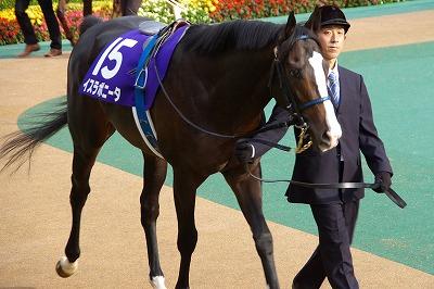 2014年度JRA賞発表、年度代表馬はジェンティルドンナ_b0015386_21521795.jpg