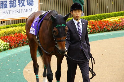 2014年度JRA賞発表、年度代表馬はジェンティルドンナ_b0015386_21525129.jpg