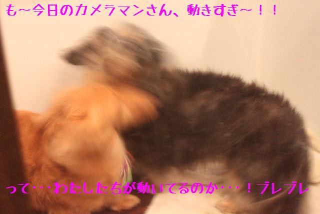 b0130018_15121241.jpg