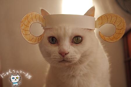 羊猫_e0031853_19375029.jpg