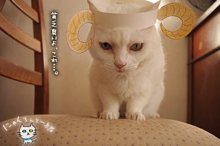 羊猫_e0031853_19383876.jpg