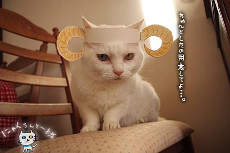 羊猫_e0031853_19392019.jpg