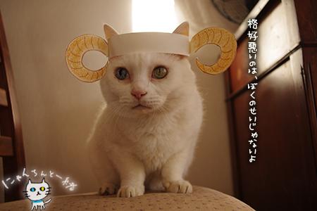羊猫_e0031853_19402982.jpg