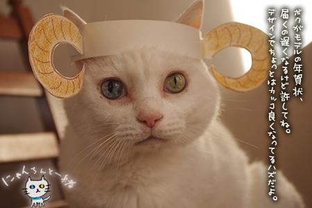 羊猫_e0031853_19413016.jpg