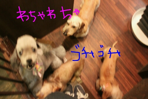 ツボ_b0130018_10312854.jpg